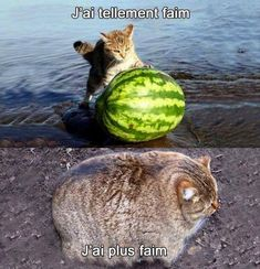 More memes, funny videos and pics on Funny Video Memes, Stupid Funny Memes, Wtf Funny, Funny Fails, Funny Cute, Funny Videos, Funny Animal Pictures, Funny Images, Funny Photos