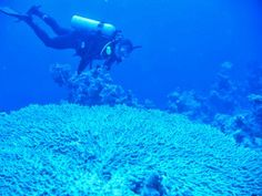 Red Sea Coral. .. Beautiful but Sodwana is probably more colourful