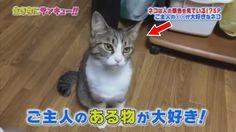 トコトン掘り下げ隊!生き物にサンキュー!!ネコは人の顔をみているSP!2017年9月25日