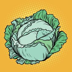 Cabbage, healthy vegetarian food, farm product, pop art retro vector illustration