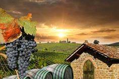 Chianti wineries