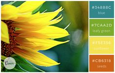 100 Brilliant Color Combinations: And How to Apply Them to Your Designs – Design School Hex Color Palette, Color Palate, Colour Schemes, Color Combinations, Colour Palettes, Paleta De Color Hexadecimal, Sunflower Colors, Types Of Colours, Colour Board