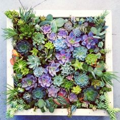 Succulent verticle garden!