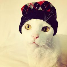 A patterned toque provides a hint of pizzazz while keeping your ears protected. | 22 Ways To Make Your Winter Fashion On Point, As Told By Cats