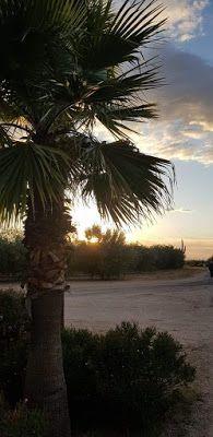 Μήπως χάνεται η ελληνικότητα των εορτών μας; | Σύναξη Νέων Παλαιοχωρίου Beach, Water, Outdoor, Gripe Water, Outdoors, The Beach, Beaches, Outdoor Games, The Great Outdoors