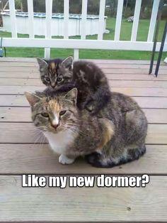 Like my new dormer? http://cheezburger.com/9023521280