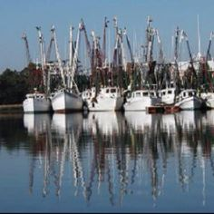 Shrimp boats in McClellanville