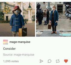 Newt Scamander is actually Padington Bear confirmed. Harry Potter Universal, Harry Potter Fandom, Harry Potter Memes, Slytherin, Hogwarts, Scorpius And Rose, Eddie Redmayne, Fandoms, Fantastic Beasts And Where