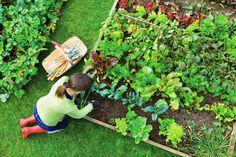 Colores y aroma son aspectos agradables que realzan nuestros jardines y balcones, que podemos incorporar fácilmente con casi todas las hierbas aromáticas...