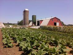 Ben & Sadie Miller farm - Mine Road, Nickel Mines, PA - Southern Lancaster County - July, 2011