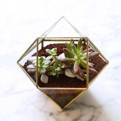 Gracias @lgking_ por mi bello regalo de Navidad #gifts #christmas #navidad #intercambio #regalos #dreams #terrarium #suculentas #plants #home