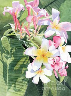 Plumeria Painting - Aloha by Debbie Cannatella Watercolor And Ink, Watercolor Flowers, Watercolor Paintings, Watercolor Techniques, Pictures To Paint, Botanical Art, Beautiful Paintings, Painting Inspiration, Flower Art