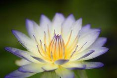 En güzel dekorasyon paylaşımları için Kadinika.com #kadinika #dekorasyon #decoration #woman #women Beautiful lotus flower.