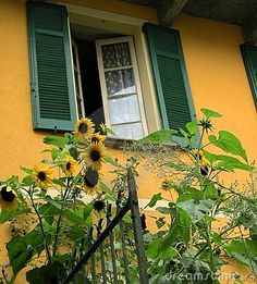 romantic+windows+in+tuscany | garden in romantic Tuscany country with sunny sunflowers and a window ...