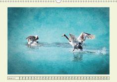 Die sonderbare Welt der lustigen Vögel - CALVENDO