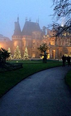 Christmas trees.. at Waddesdon Manor - Waddesdon, Buckinghamshire, England