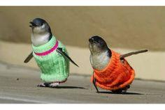ペンギンさん、もう大丈夫だよ。このセーターを着てみて | roomie(ルーミー)