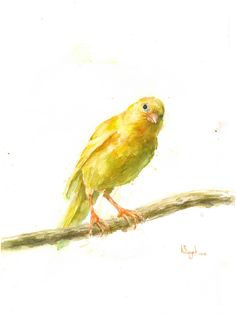 Organizationally Impaired Watercolor Bird, Watercolor Animals, Canary Birds, Bird Sketch, Artist Portfolio, Impressionist Paintings, Art Reference Poses, Tumblr Wallpaper, Mellow Yellow