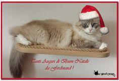 Tanti micio #auguri di #buon#natale da Ferdinand!! #christmas #cat #gatti #CatWoodDesign