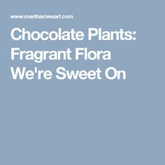 Chocolate Plants: Fragrant Flora We're Sweet On