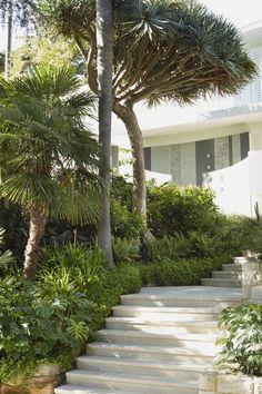 Crazy Paving, Architectural Plants, Garden Posts, Coastal Gardens, Backyard Garden Design, Exotic Plants, Plantation, Architecture, Midcentury Modern