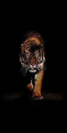 48 ideas for tattoo animal nature big cats Tier Wallpaper, Animal Wallpaper, Beautiful Cats, Animals Beautiful, Animals And Pets, Cute Animals, Tiger Artwork, Tiger Pictures, Big Cats Art