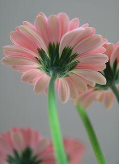 Flowers   Daisy's   Flowers Everywhere...