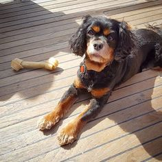 Happy sailor... . . #oceanrosie #boatride #bestdayever #salishsea #boating #boatingdog #grandbanks Dogs On Boats, Best Day Ever, Boating, Sailor, Ocean, Happy, Photos, Animals, Instagram