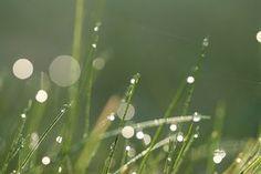The Disadvantages of the Amazoy Zoysia Grass thumbnail