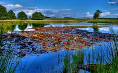 Lotus in The Lake Photography Wallpaper