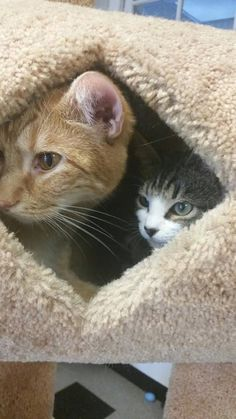 Cat Who Can't Walk Meets Kitten Just Like Him — And Falls In Love
