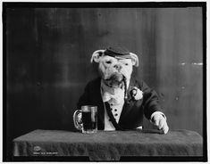 This cool series of photos of bulldogs dressed in old fashioned outfits from early last century are catalogued in the Library of Congress. The images are estimated to have been created around 1905, and each photograph was taken with a large format camera on an 8x10 negative.