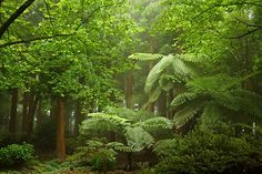 Cold rain forest on the northwest coast, Serreta,Terceira, Azores Terceira Azores, Paradise On Earth, Beautiful Places To Travel, The Beautiful Country, Spain And Portugal, Beautiful Islands, Places To Go, Cold Rain, National Parks