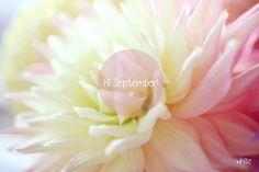 September nicolawhite photography ©