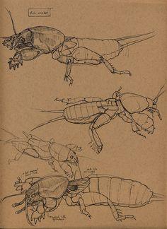 ArtStation - Insects, Floris van der Peet
