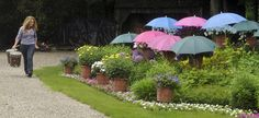 Chrissie D'Esopo walks past her garden before a tour in 2009, after protecting the flowers with umbrellas.