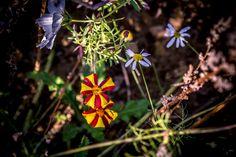 Pretty little flower by Olivier Ferrari on 500px