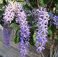 Afbeeldingsresultaat voor fotos  tropische bloemen