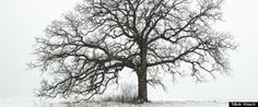 That Tree Photos | Photographer Mark Hirsch becomes one with an oak tree in a lovely documentary project.