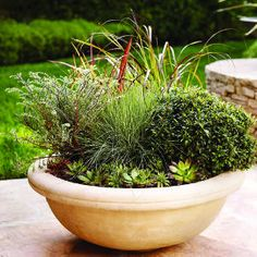 Concrete bowl - Cool Container Gardens - Sunset Mobile