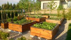 Zrób to sam. Podwyższone grządki warzywne. DIY raised garden beds.