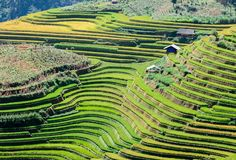 Beautiful terraced rice fields during the harvest season also attract a lot of tourists to Vietnam.