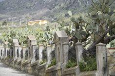 Facitur - Calvario di Ventimiglia di Sicilia, ai piedi della Riserva Pizzo Cane