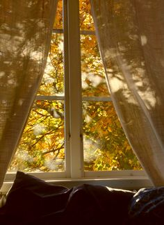 Looking at the changing colors of fall through a window....  Ana Rosa, hoursofgold:
