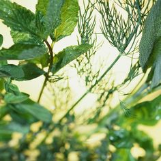 Easy start indoor herb garden - a good way to save money & to have fresh herbs at your fingertips, even in the winter.