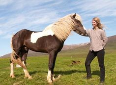 Icelandic horse. I would love to have one some day
