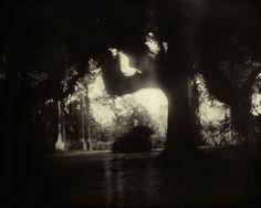 Sally Mann: Southern Landscapes1998