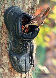 Faites attention où vous laissertraîner vos chaussures...
