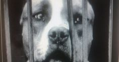 IMPORTANT PETITION:Repeal of Act 5346, which allows, with different means to kill dogs and cats.