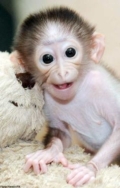 Cute Baby Monkey pictures - Smiling Monkey Pictures
